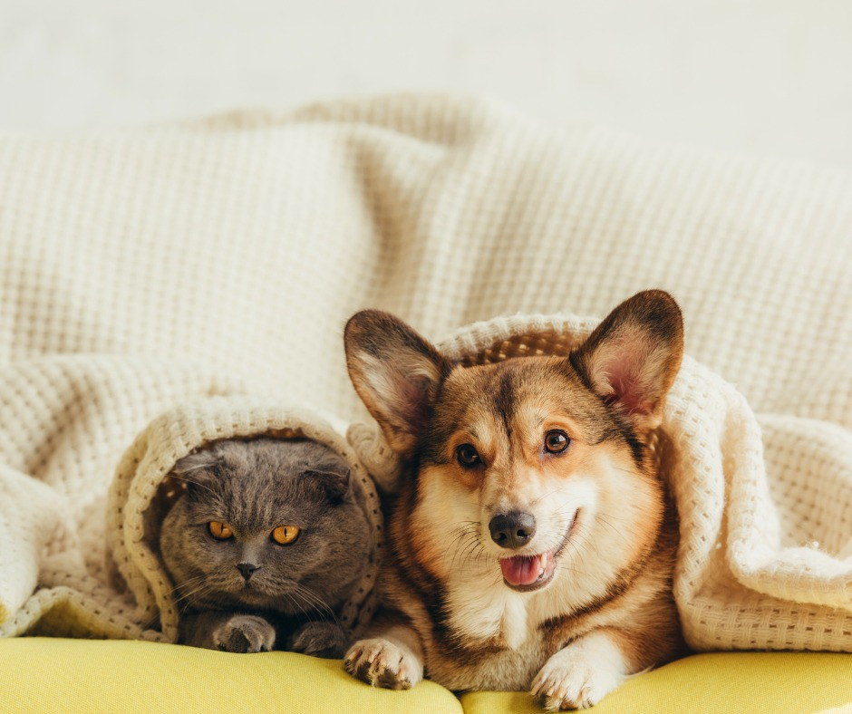 Signs of Anxiety in Dogs and Cats