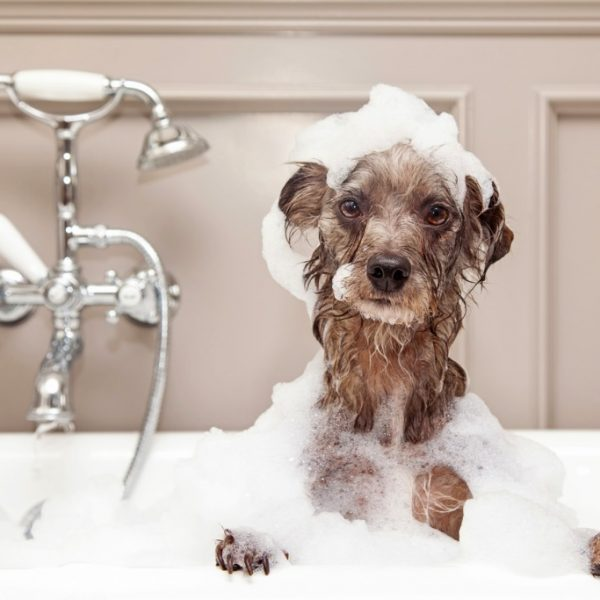 Making Your Own Dog Shampoo