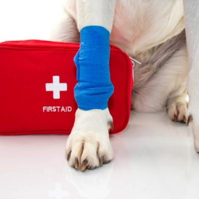 First Aid Kit for Your Pet